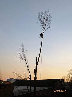 Rohde Baumpflege