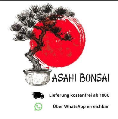 Asahi Bonsai -Kruttasch GbR